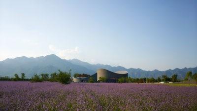 International Grape Exhibition Garden
